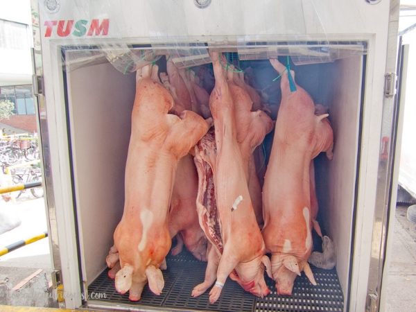 Three whole pigs ready for the market hanging in the back of a truck.