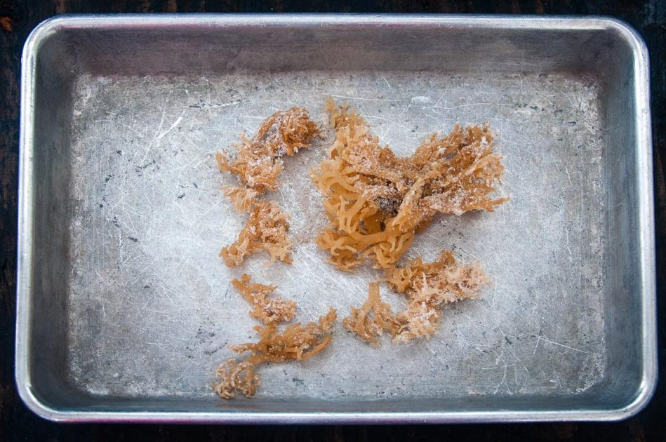 Dried Irish Moss on a baking tray.