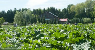 Cultivating Opportunities farm