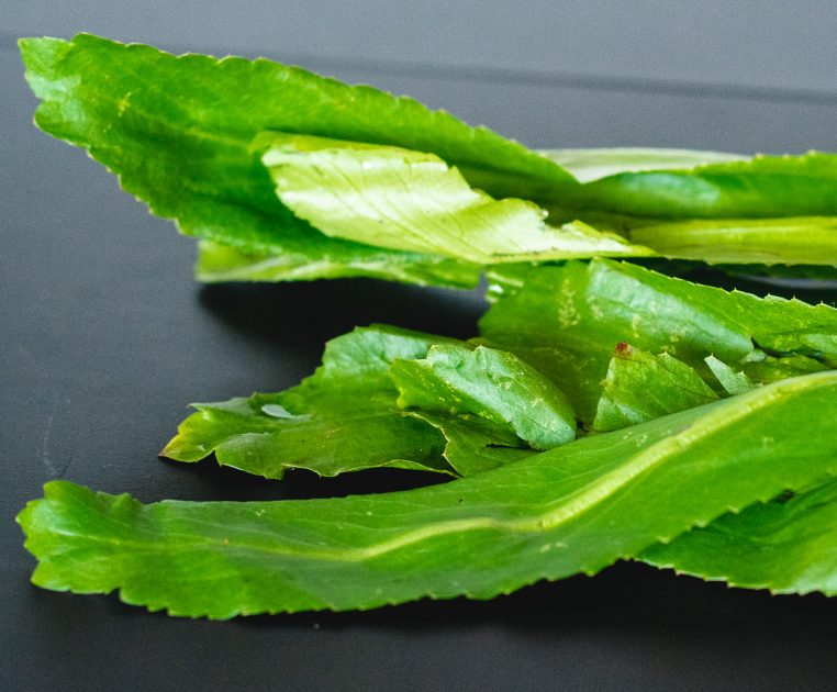 Close up of the serrated edges of stalks of culantro.
